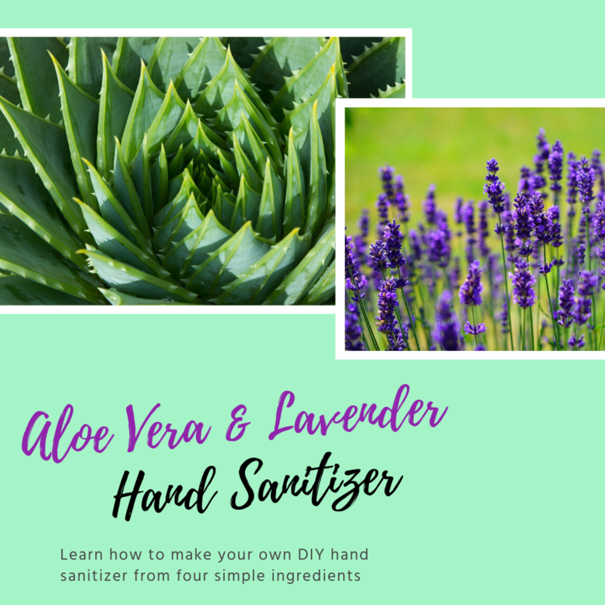 How to Make DIY Aloe Vera and Lavender Hand Sanitizer