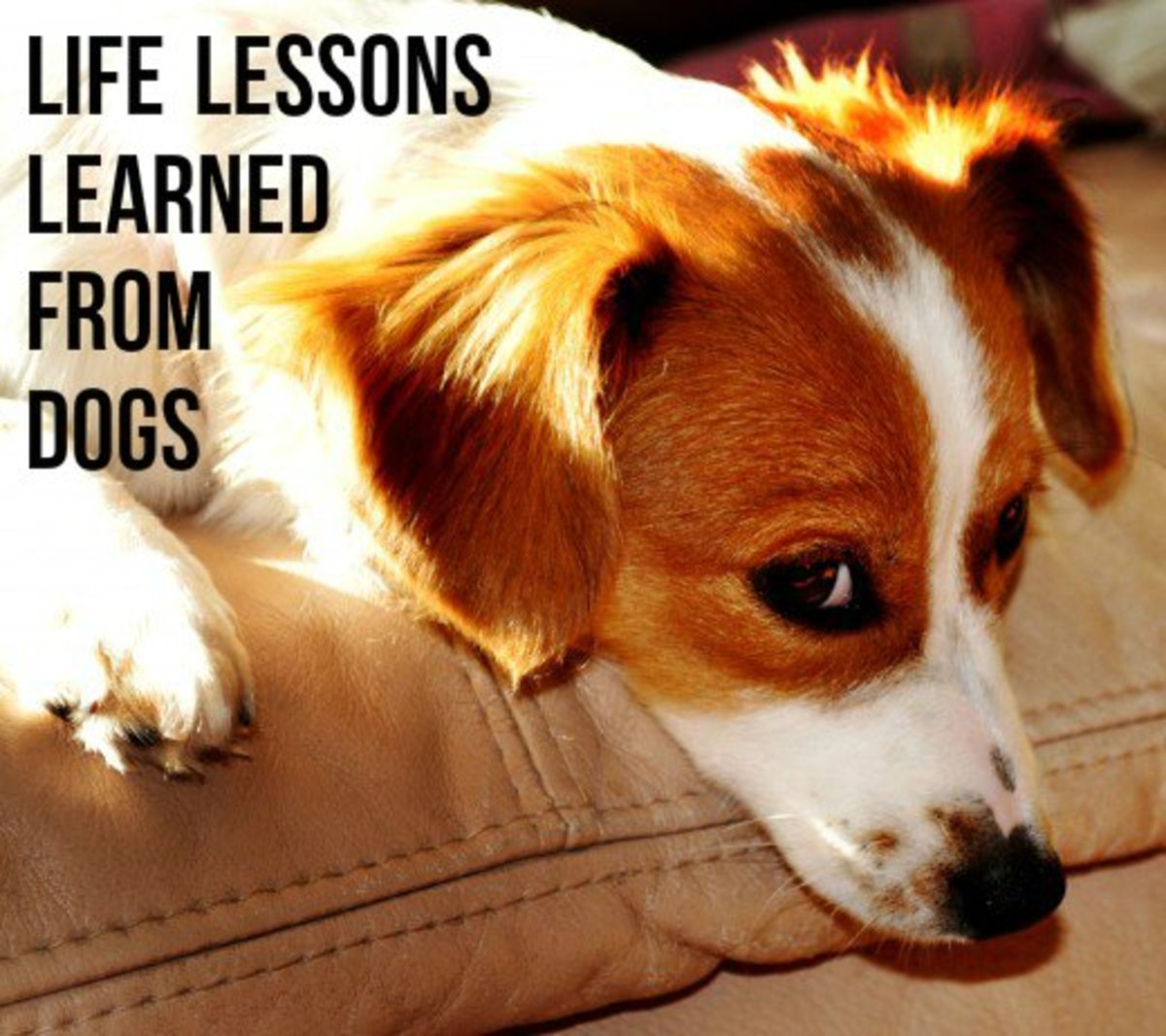 5 Lessons Dogs Can Teach Us About Being Human