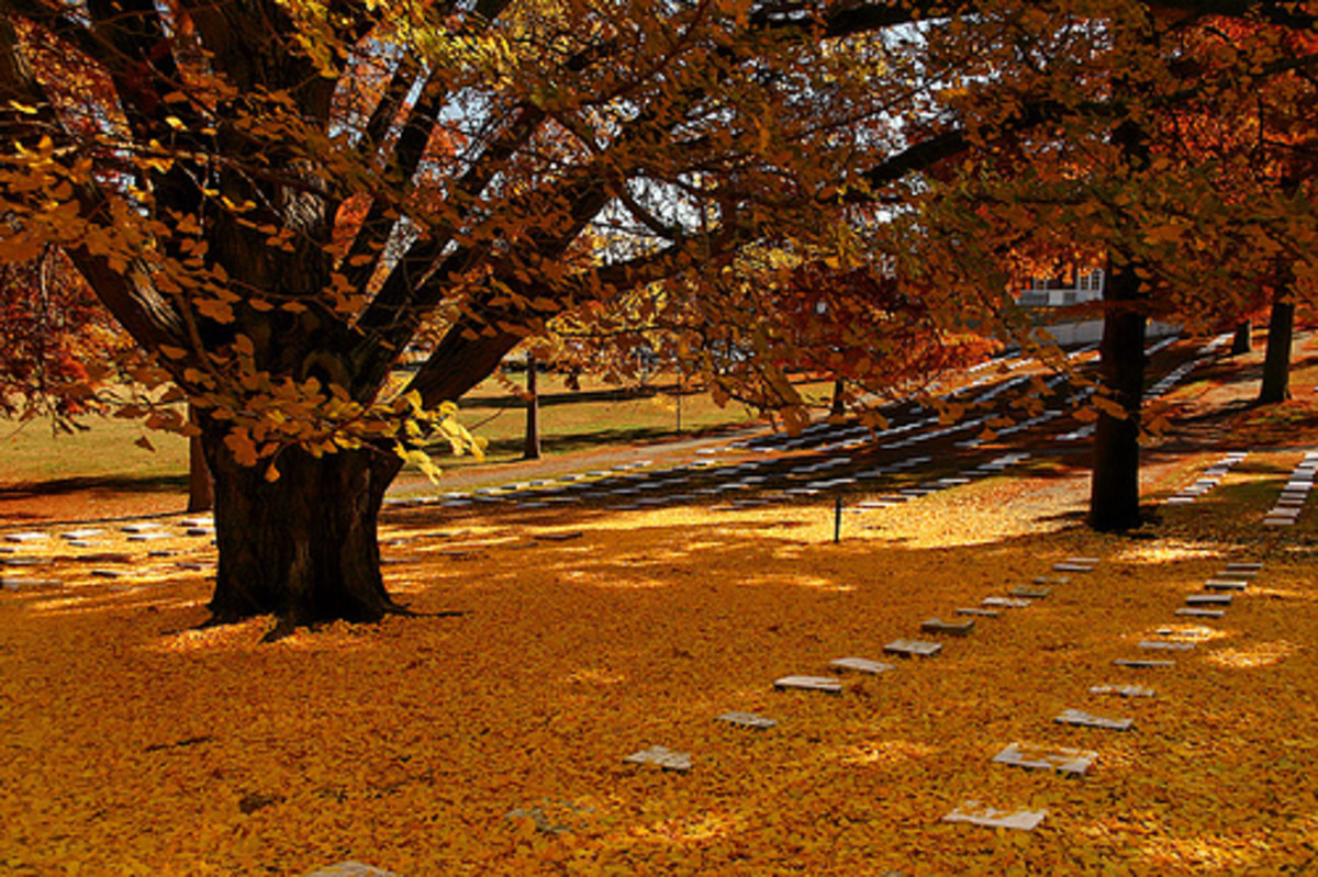 God's Acre Cemetery; Salem, North Carolina. Founded 1780.