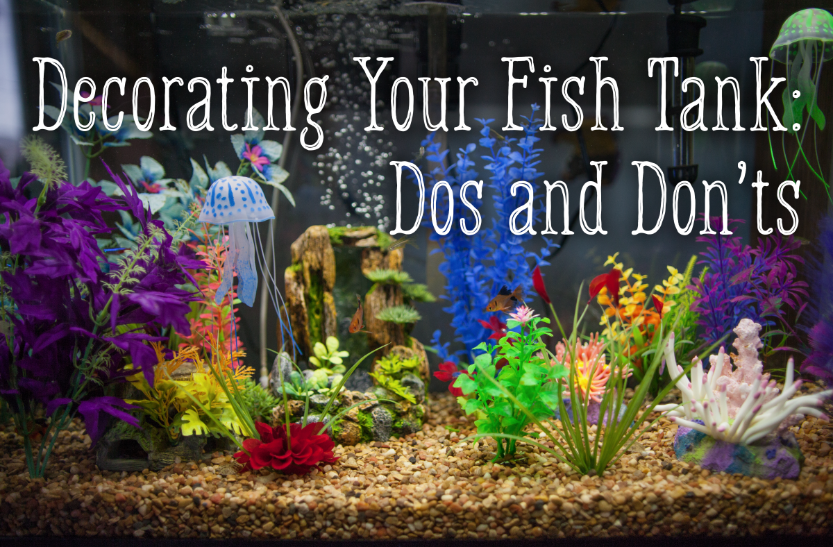Decorating Your Fish Tank: Dos and Don'ts