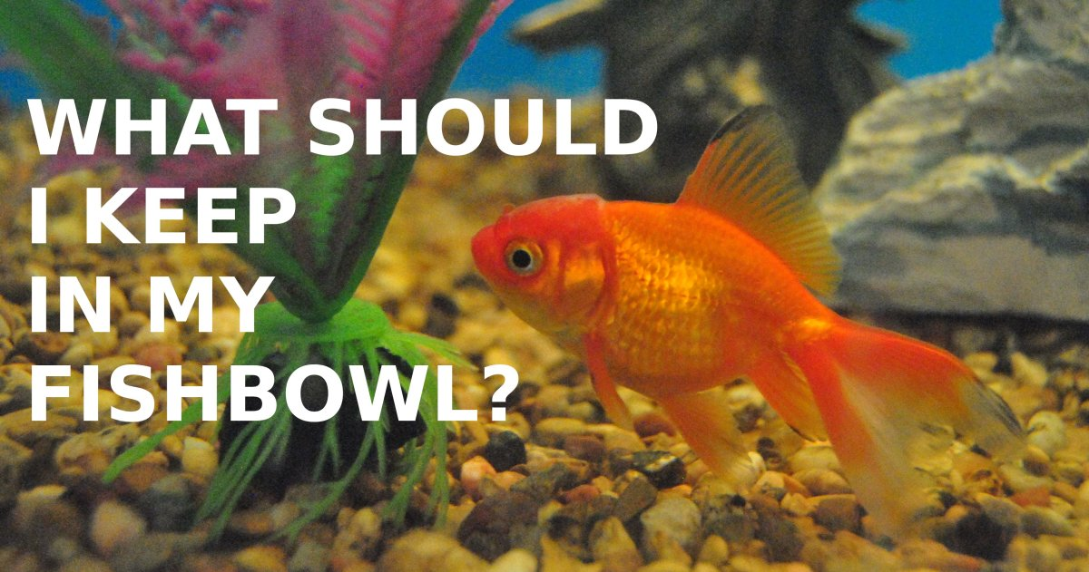 Learn more about fishbowls, including why goldfish are a bad choice for them.