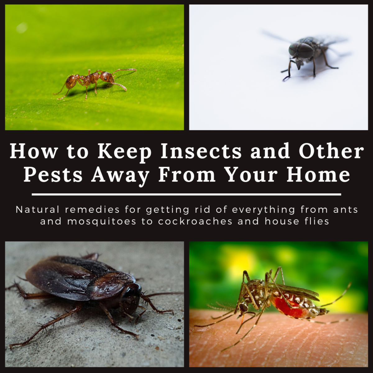 This guide will provide plenty of home remedies for getting rid of various insects and other pests.