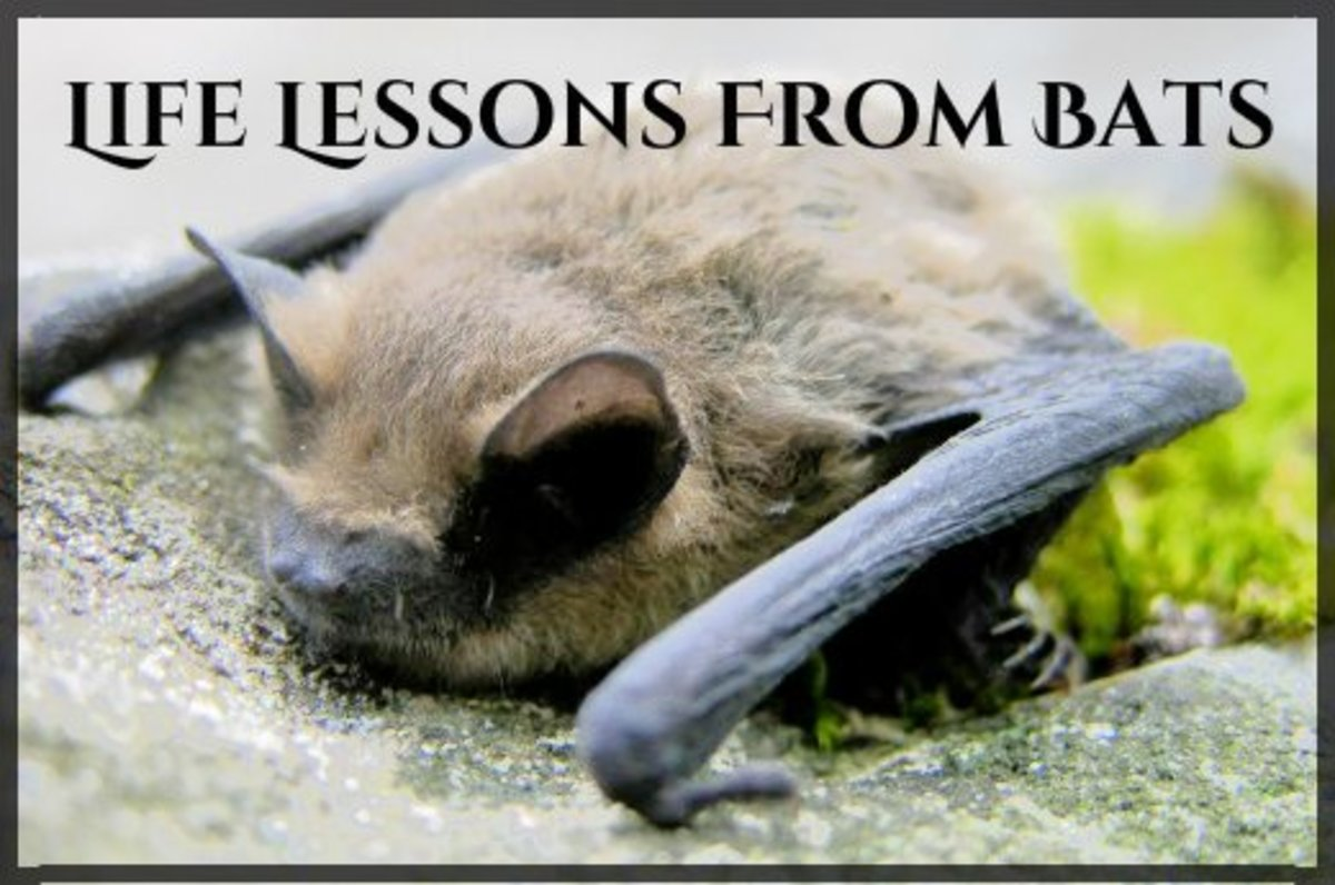 Neither classically beautiful nor cuddly, bats are nevertheless a cornerstone to a healthy ecosystem.  They control insects, pollinate plants, and disperse seeds.  What's not to love?