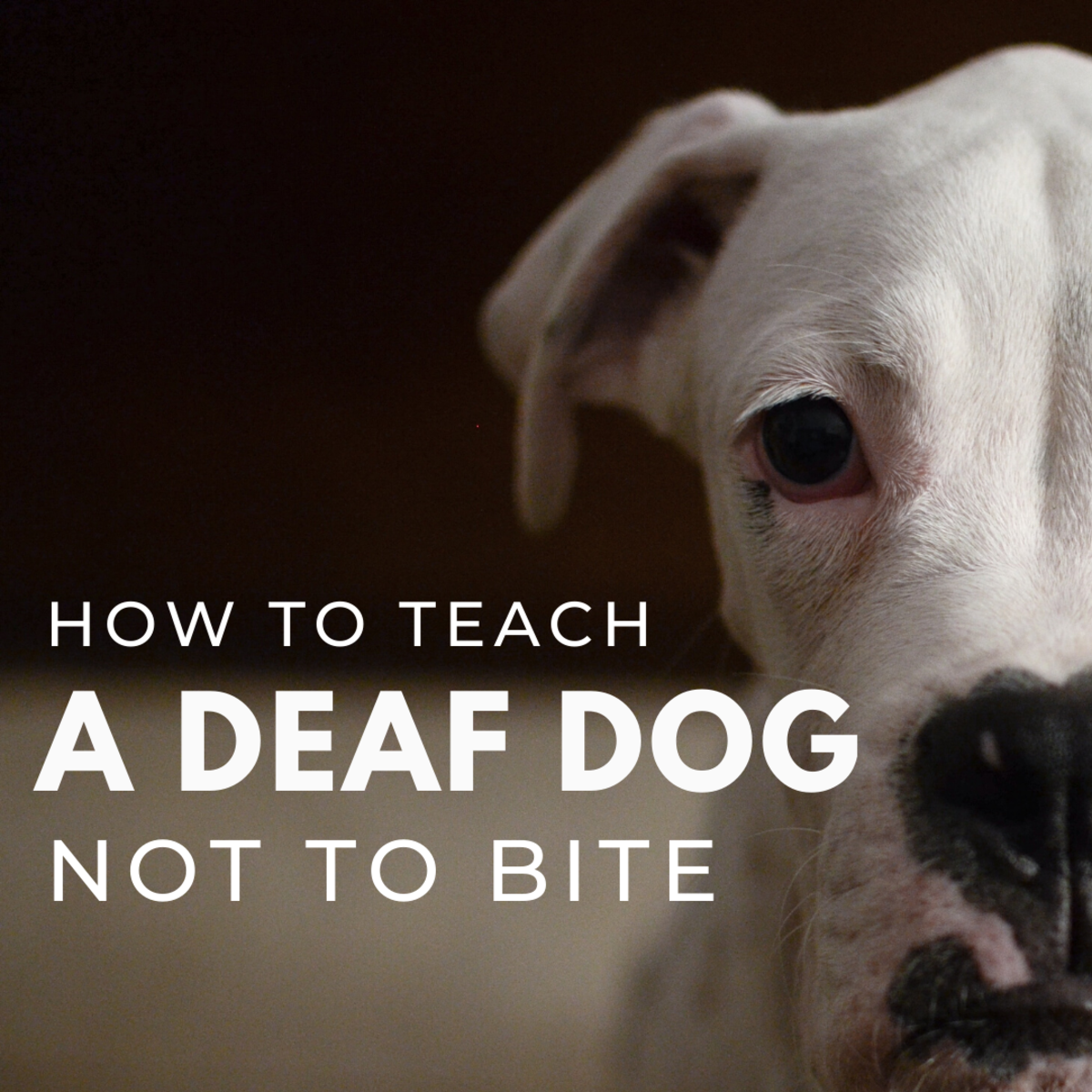 How to Teach Your Deaf Dog Not to Bite