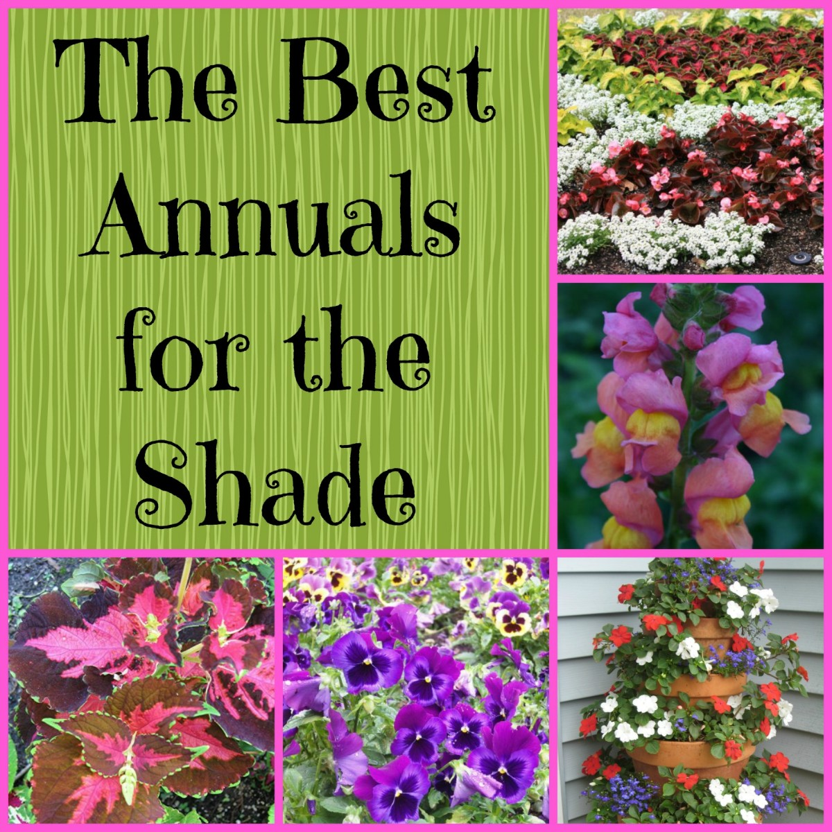 Gardening in the shade annual plants for shady areas for Flowers for shade gardens