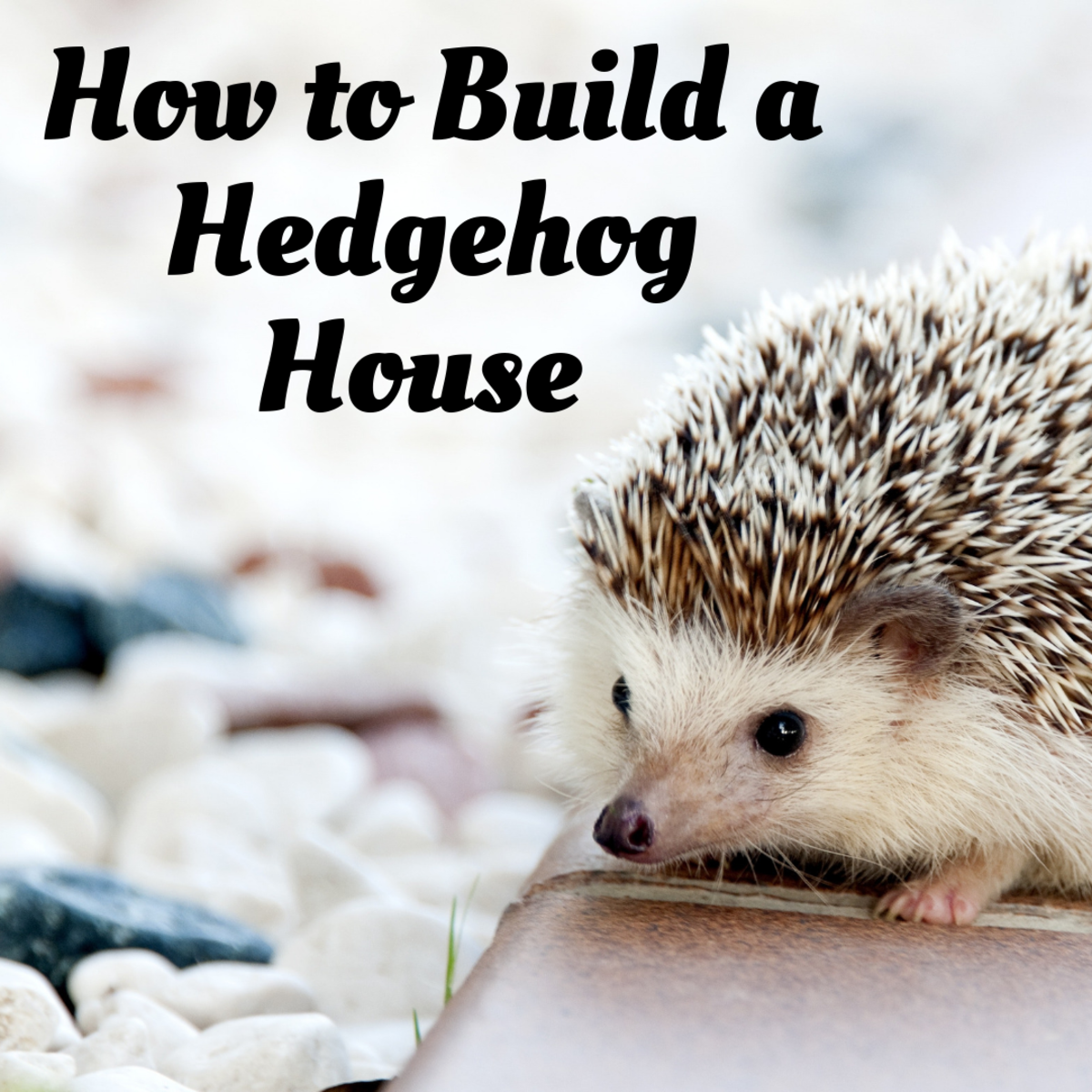 DIY Hedgehog House for Your Prickly Pal