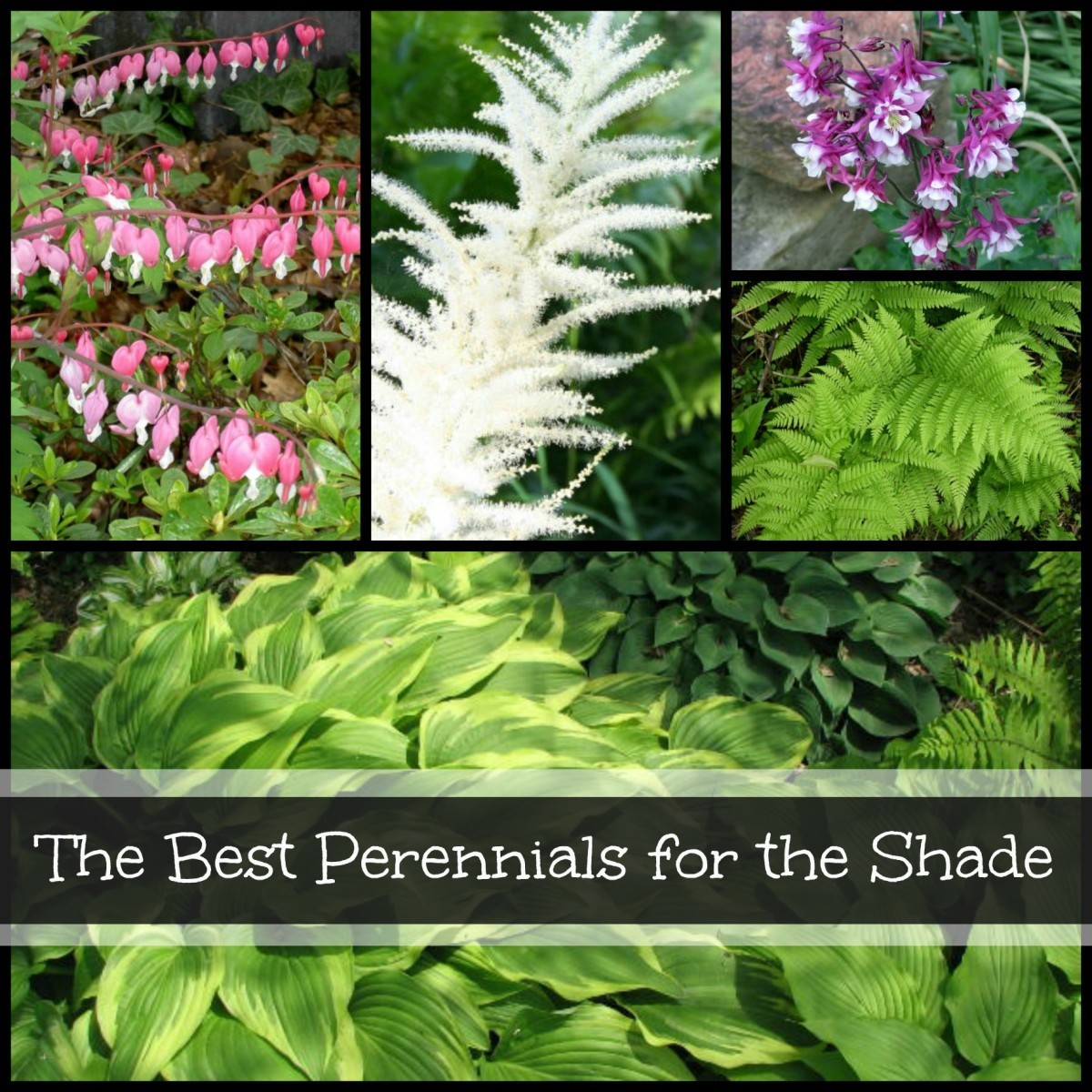 List of the best perennials for shady gardens.