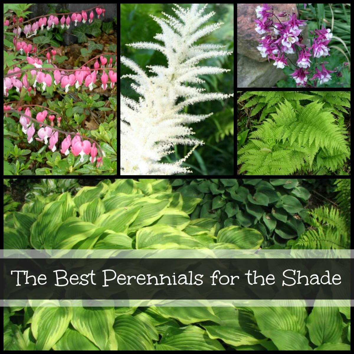 7 Best Perennials to Plant in a Shade Garden