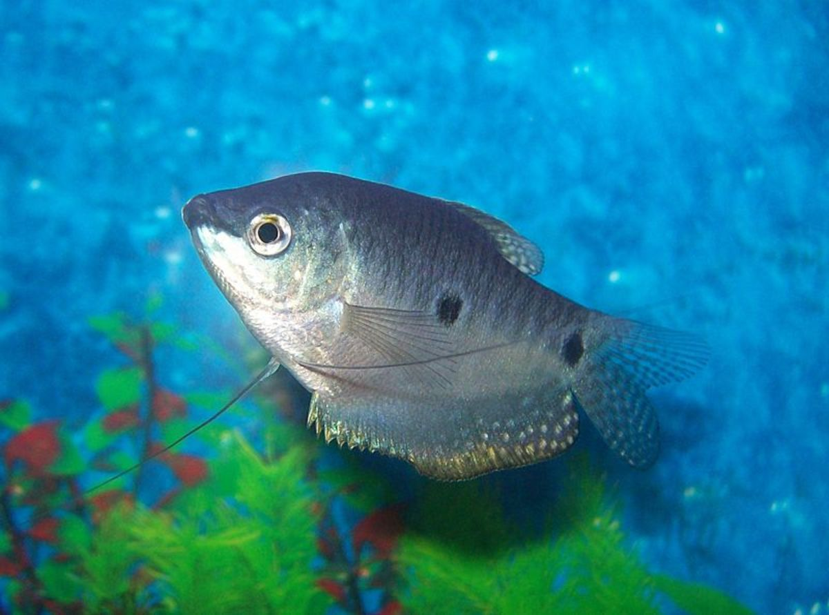 tropical fish can be challenging to care for but a few easy tips will get