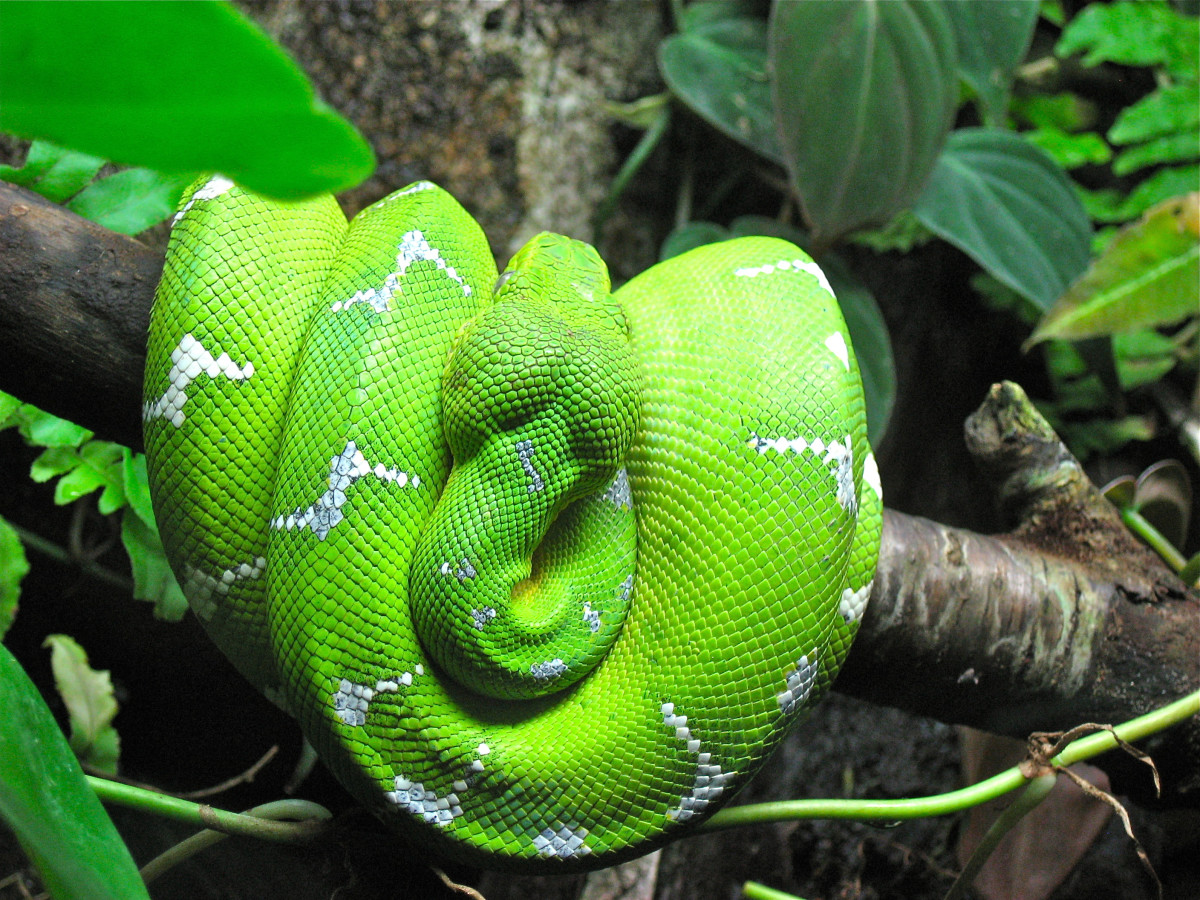 Snakes - Strange Facts About Fascinating Reptiles