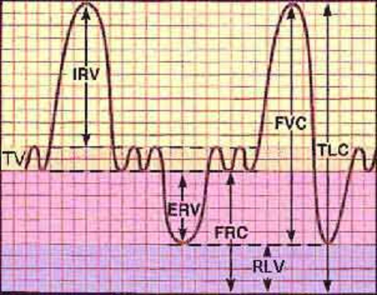 Lung Volumes and Lung Capacities in Health and Respiratory Diseases