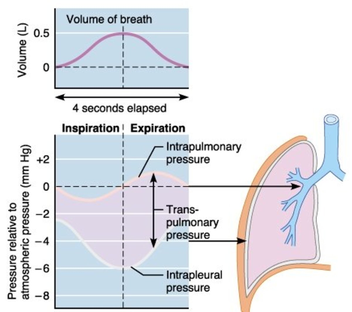 Lung Pressures and Lung Compliance