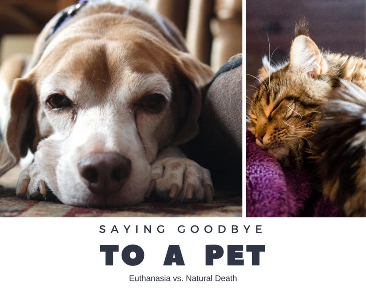 Deciding whether to put your pet down or let them die at home is a personal decision.