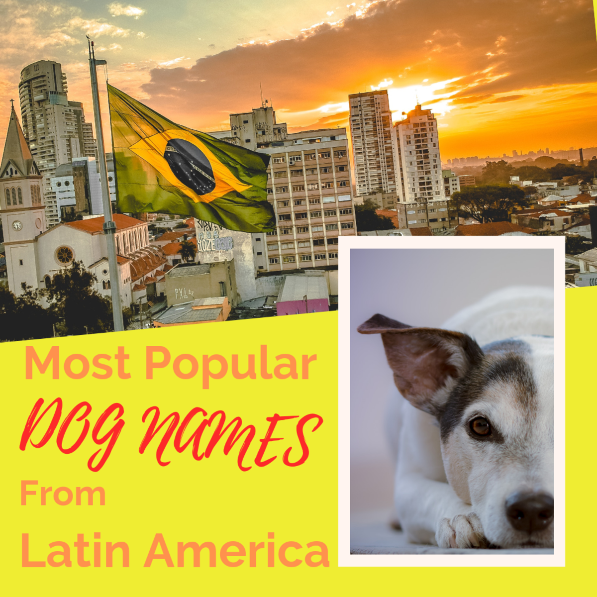 Best Dog Names From Latin America