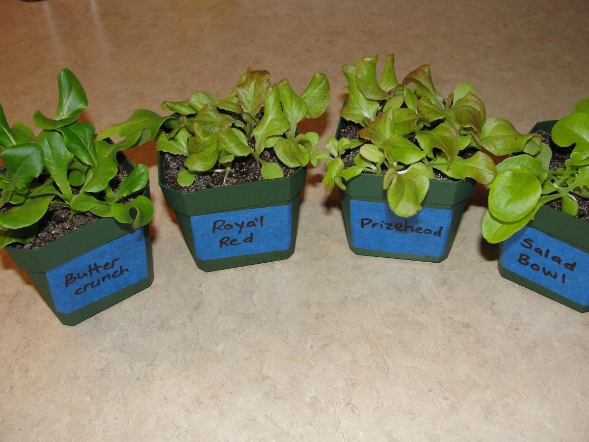 You can get great results with 2.25-inch plastic pots and a simple seed starting soil mix.