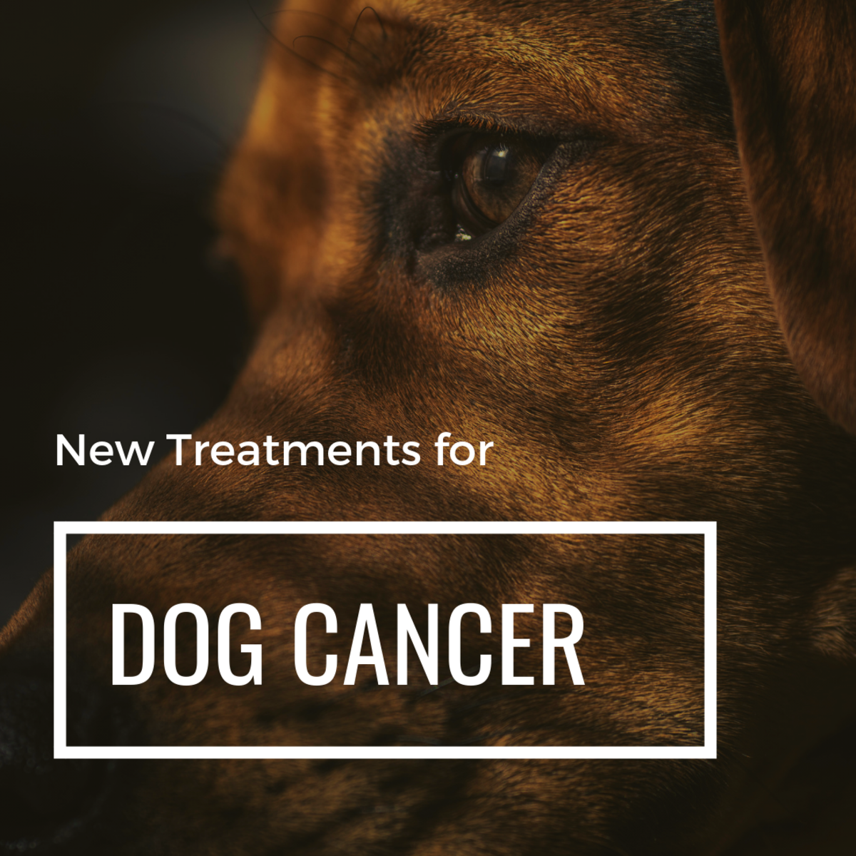 Dog Hemangiosarcoma: Proven New Treatments That Prolong Life