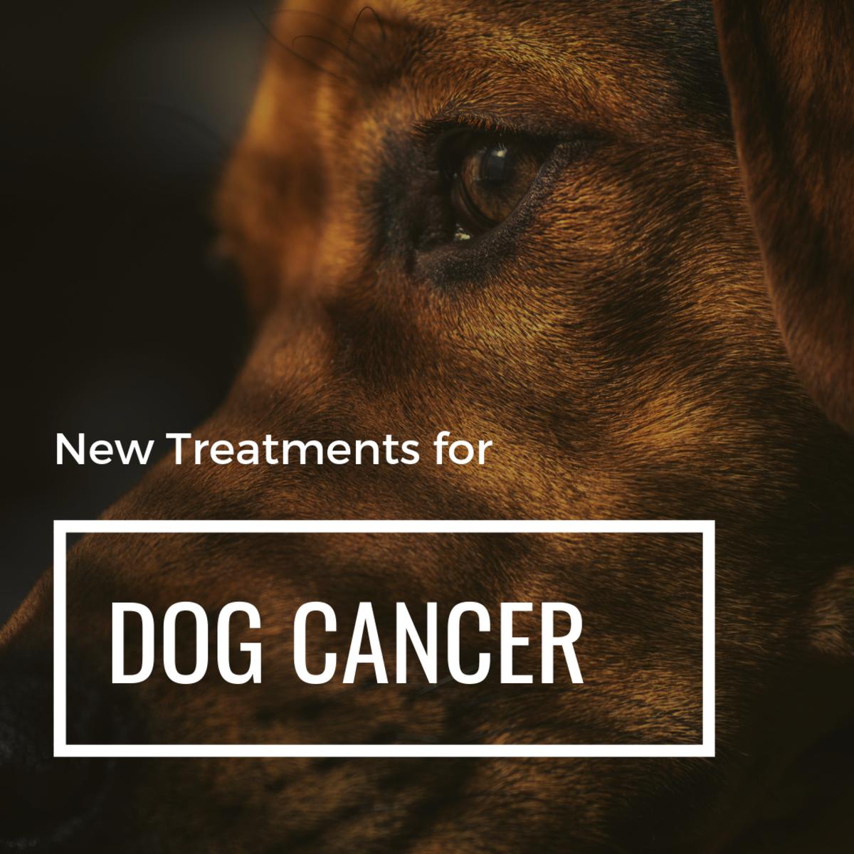 Dog Hemangiosarcoma: Proven New
