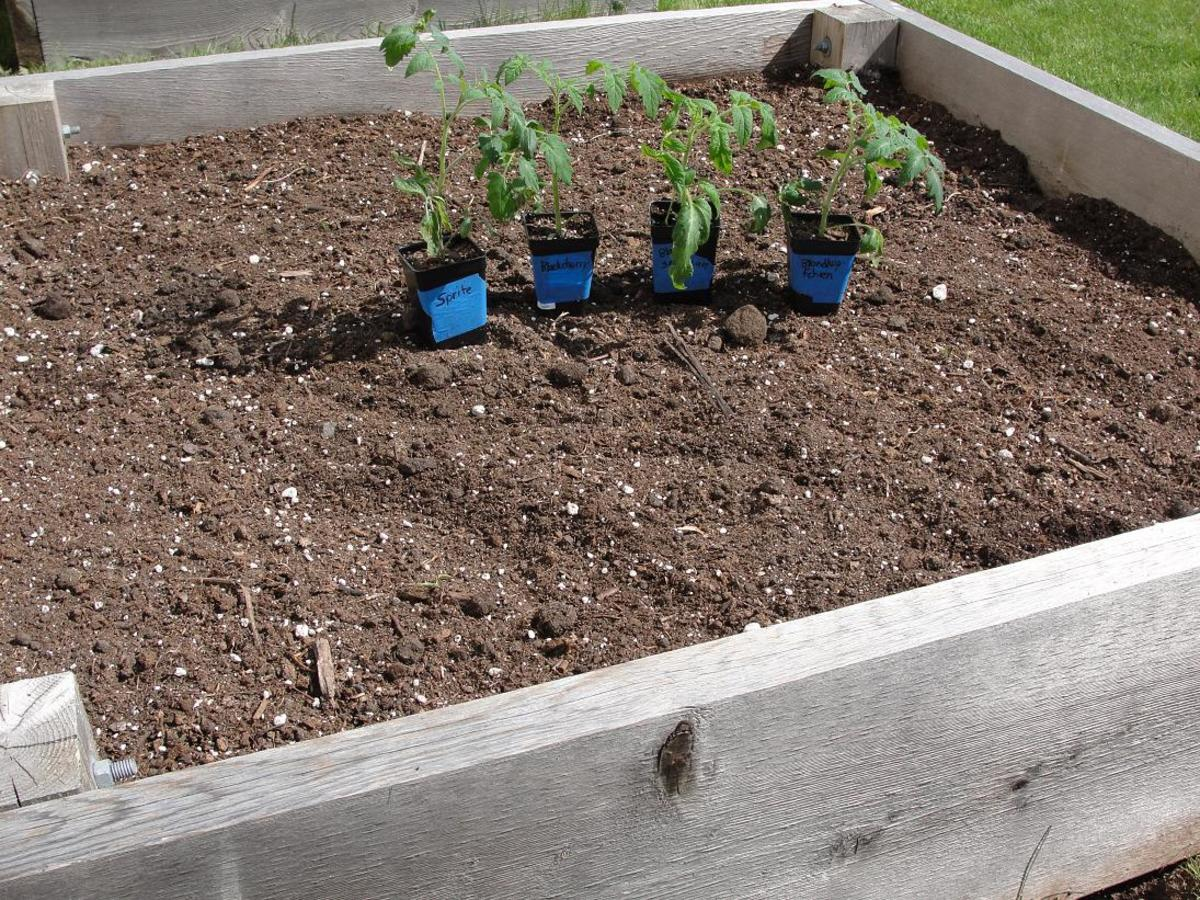 How to amend raised bed garden soil for Garden topsoil