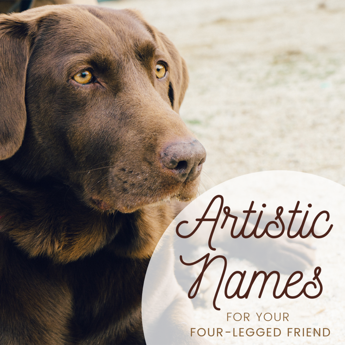 Great Artist Dog Names