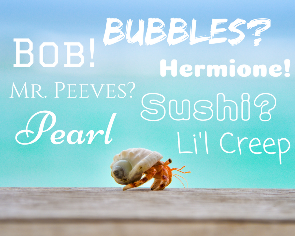 100+ Great Ideas for Hermit Crab Names