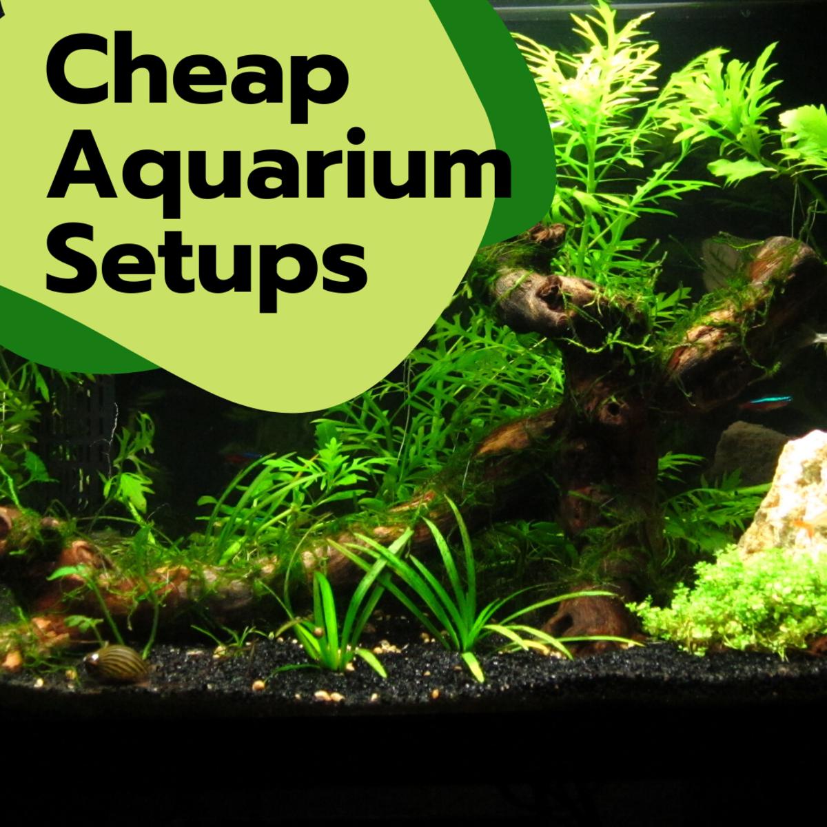 Cheap Alternatives to an Aquarium Setup