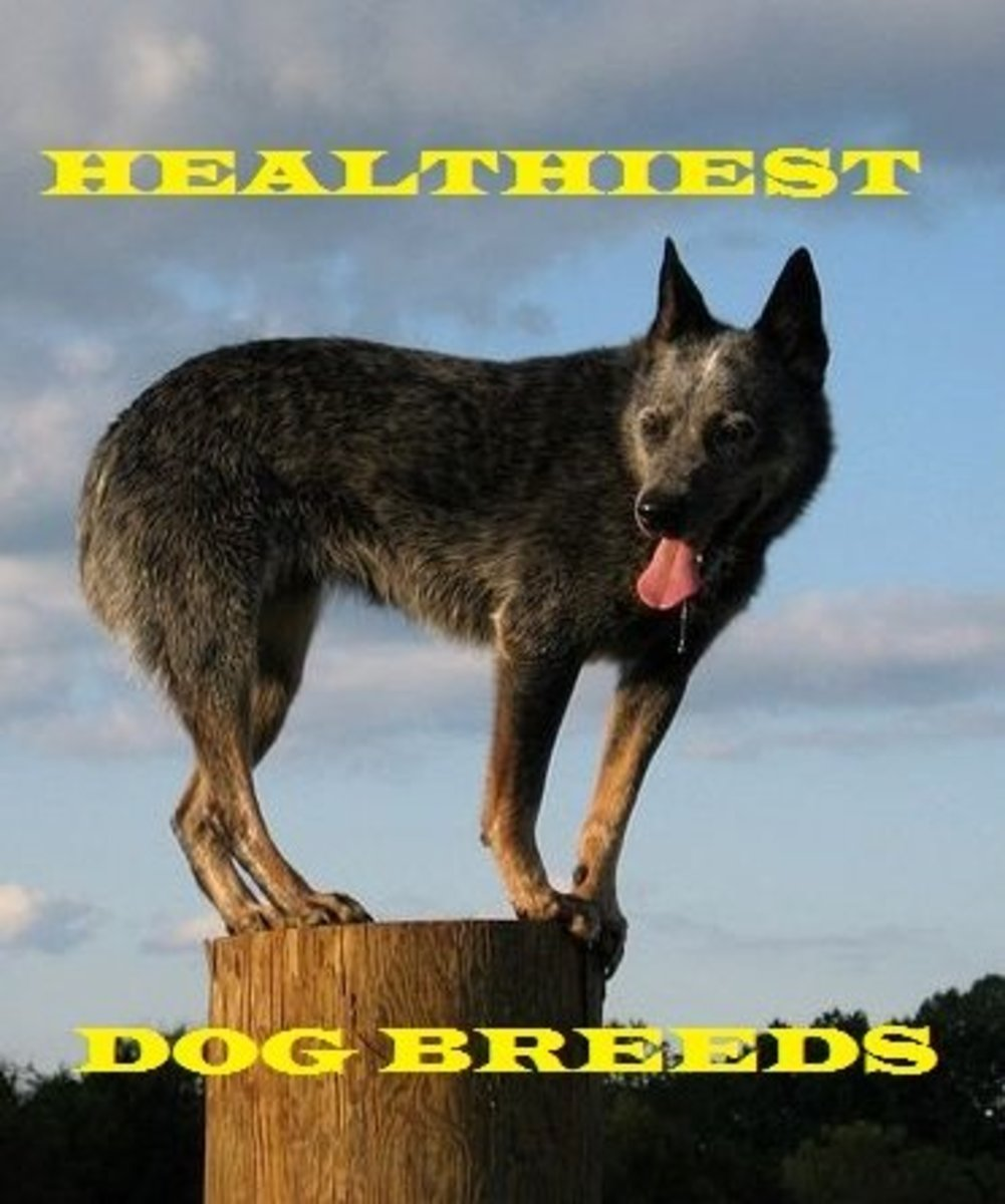 Several dog breeds are known for being healthy.
