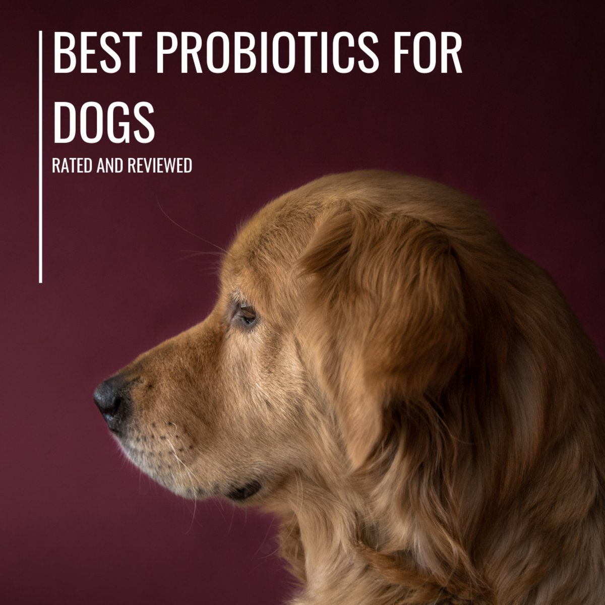 Probiotics may help relieve common gastrointestinal upset and disorders in dogs.