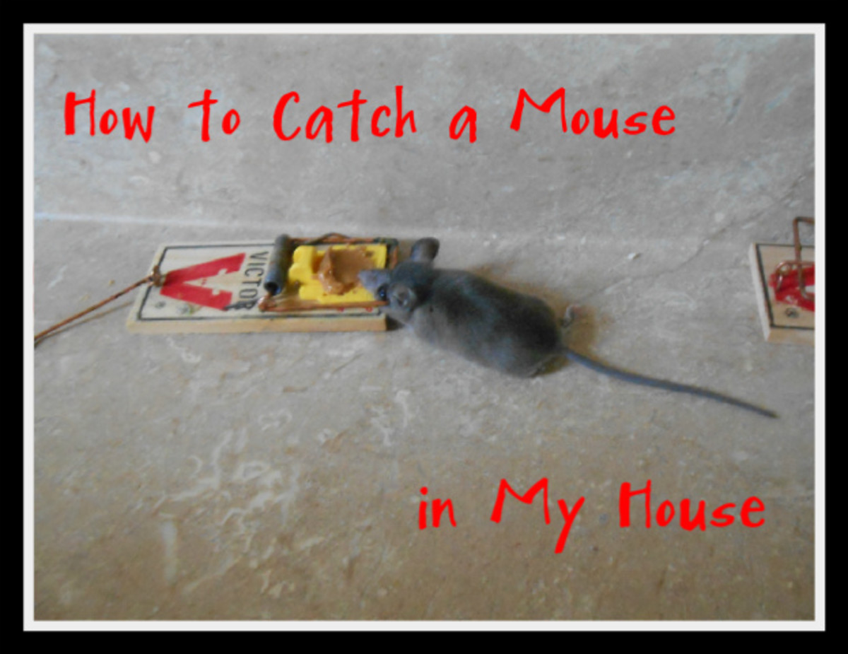 how to clean if you have mice in the house