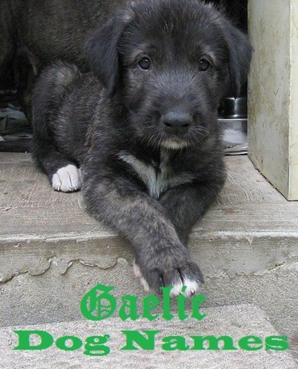 Great Gaelic Dog Names.