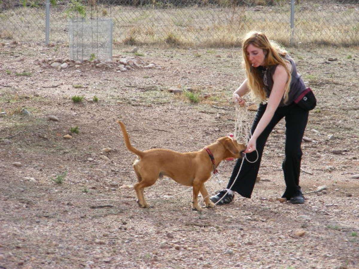 Whistle training dog