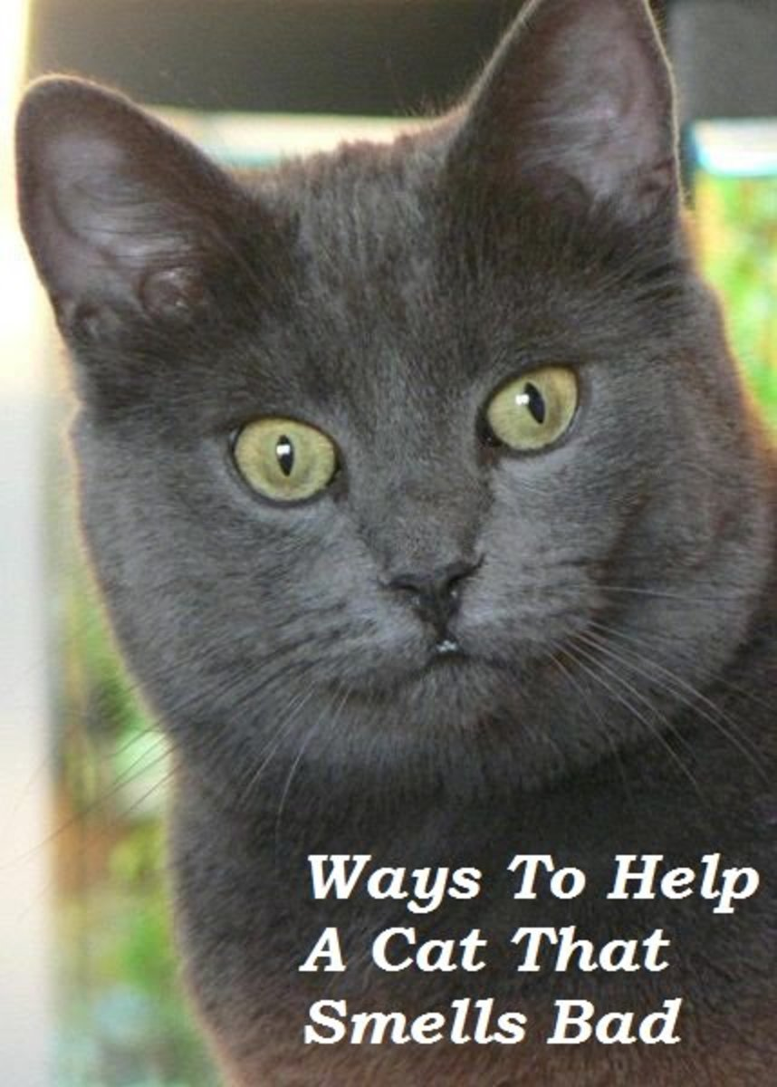 It is not natural for a cat to smell bad.  Find out what might be wrong and how to fix it.