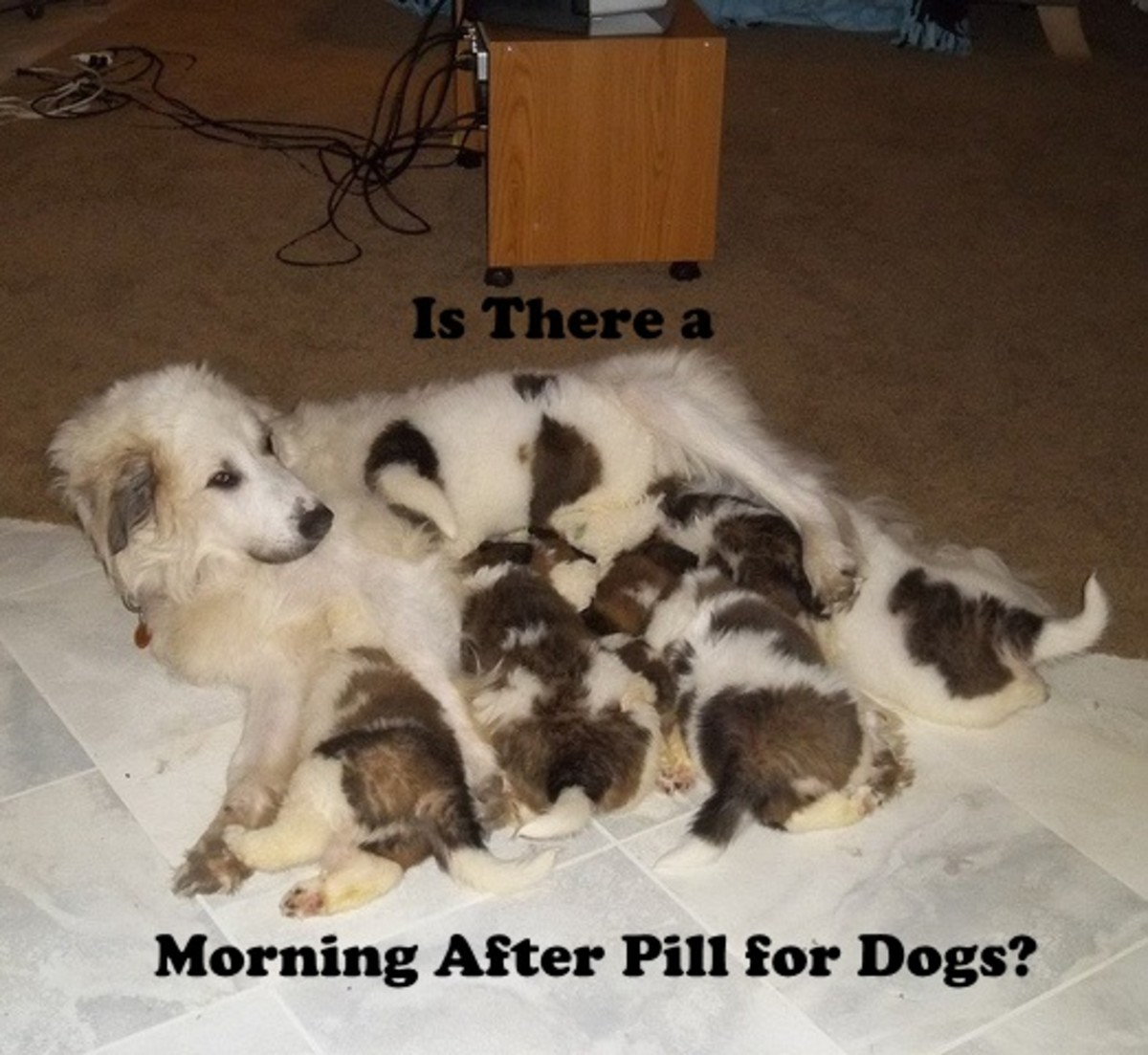 Alternative birth control methods are available to prevent pregnancy in dogs.