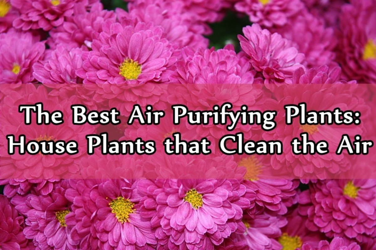 The Best Air Purifying Plants: Houseplants That Clean the Air
