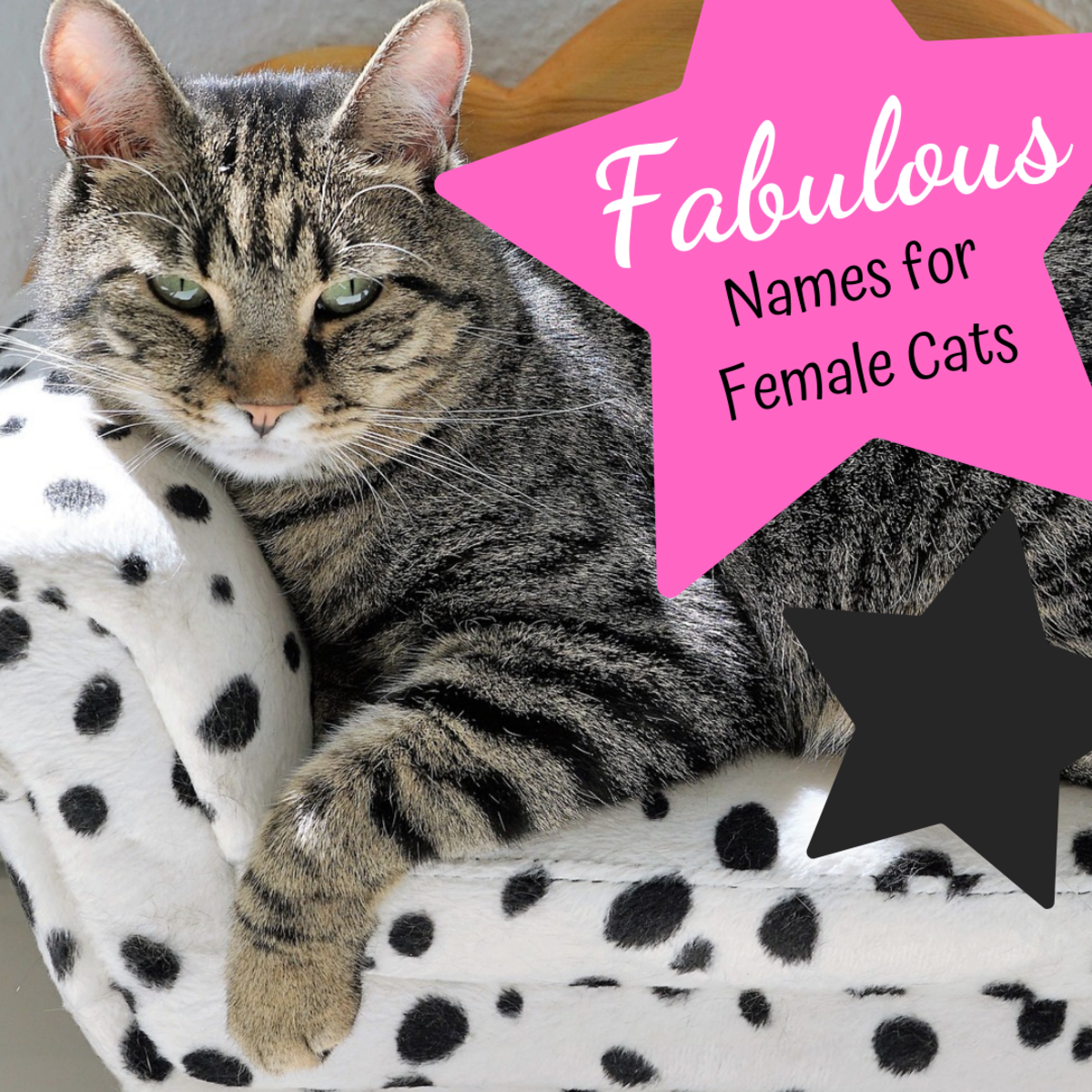 Is your cat fabulous? Find the perfect name for her from these 40 options!