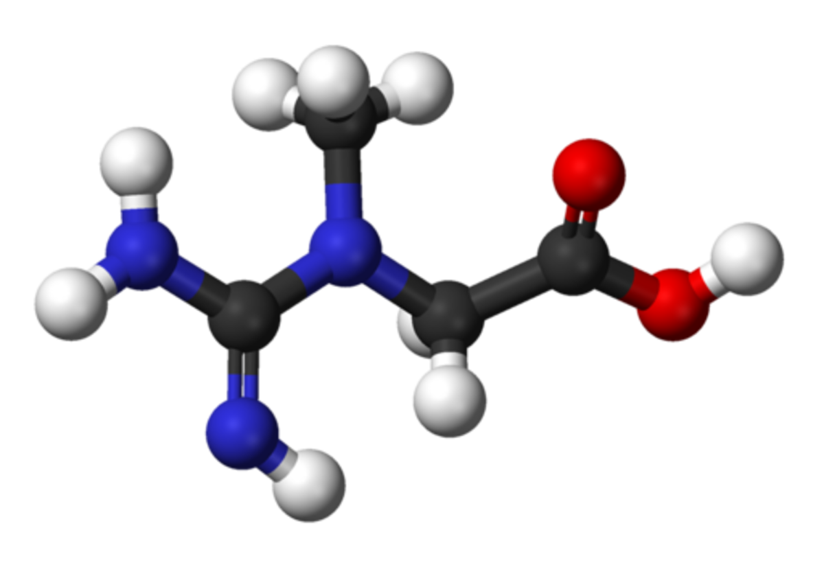 Model of creatine molecule