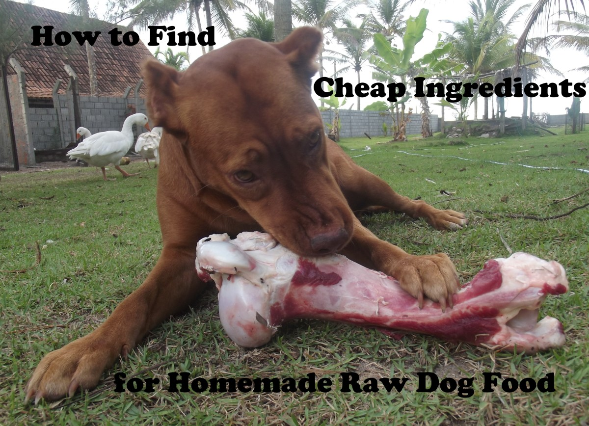 You can find inexpensive ingredients and make your own raw dog food very cheaply.