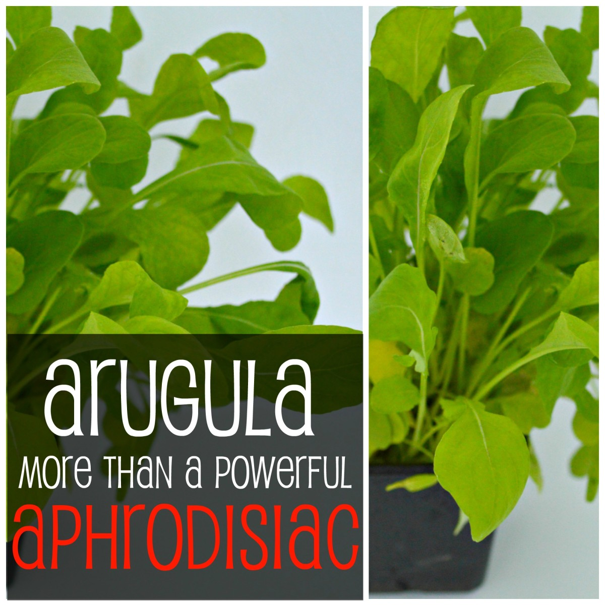 Arugula or salad rocket is revered as a libido enhancer throughout history, but that's not all! There's more to this peppery leaf, from cancer-fighting to bone health & more!