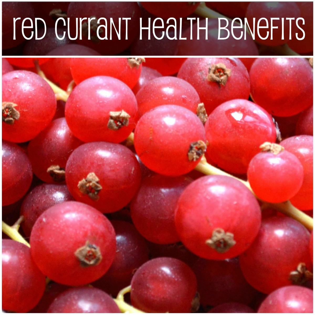 Red Currant Health Benefits and Nutrition