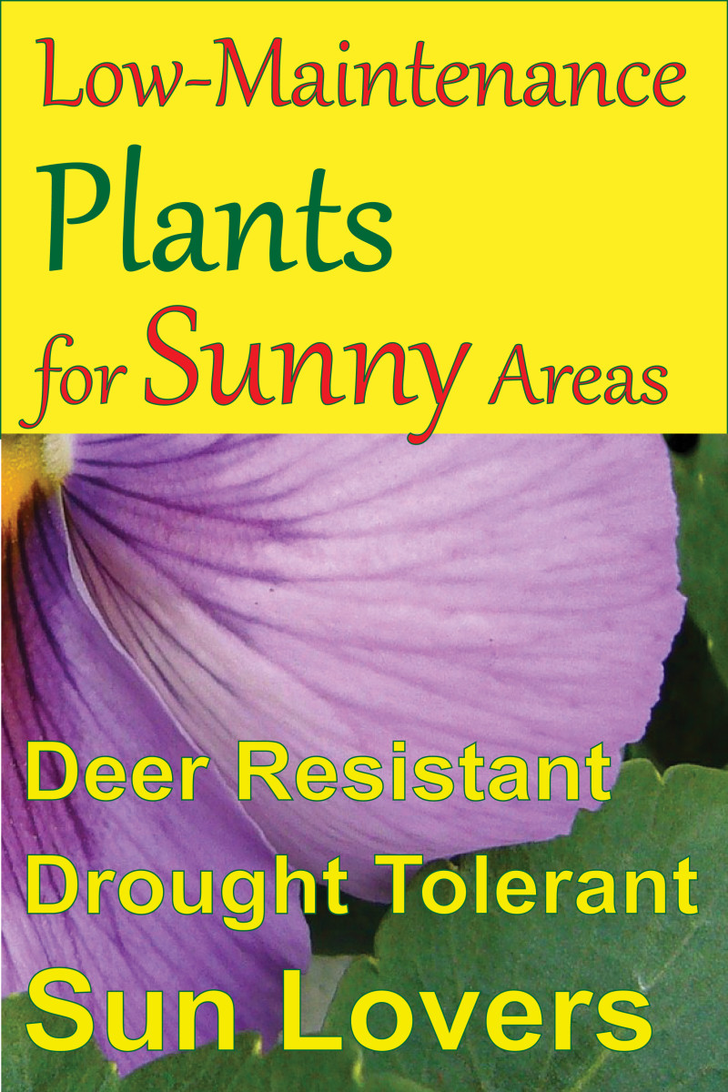 Low-Maintenance Plants for Sunny Areas