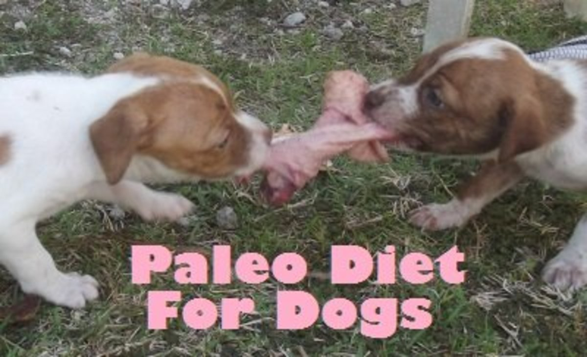 In Paleolithic times, puppies competed for natural foods.