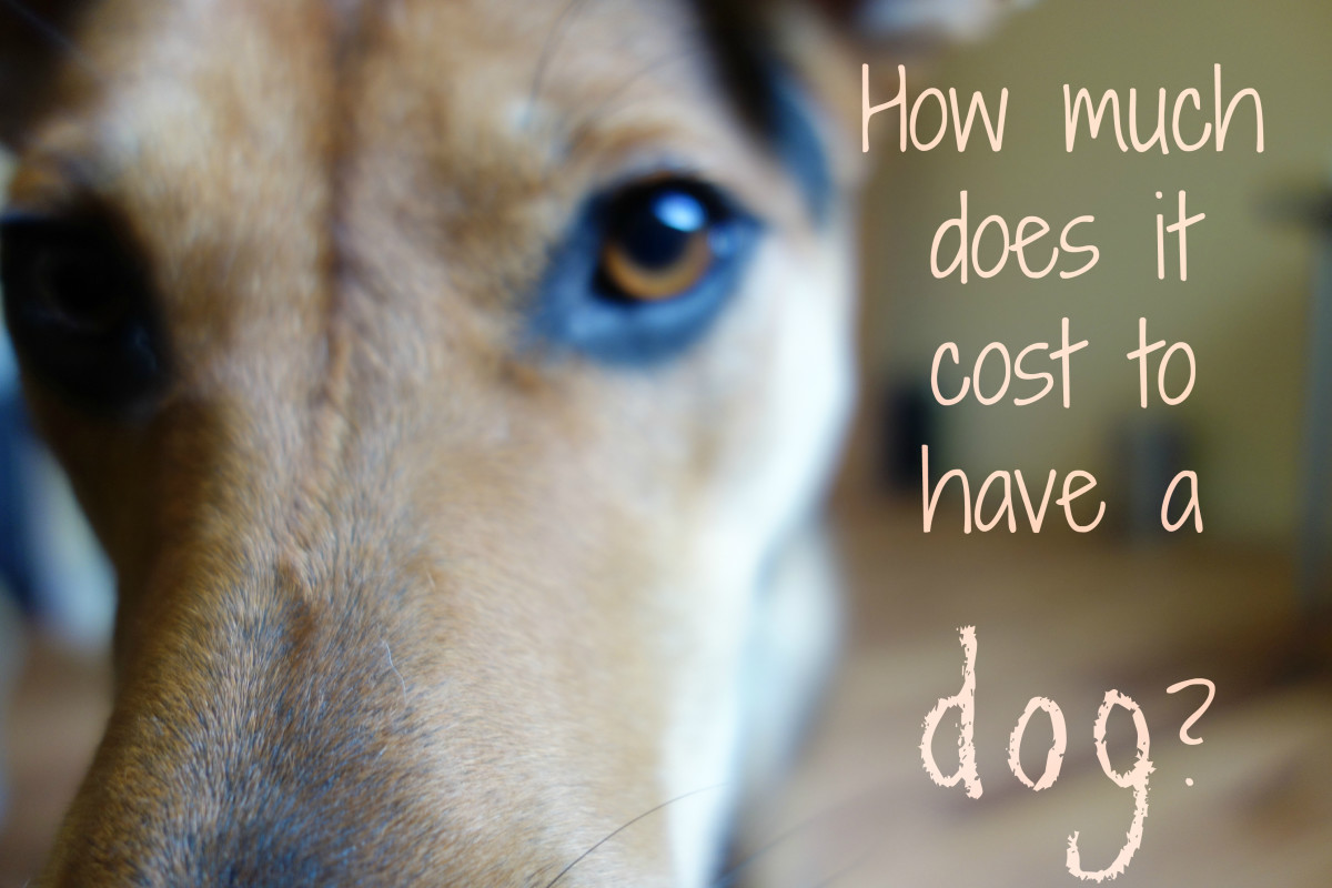 How Much Does It Really Cost to Have a Dog?