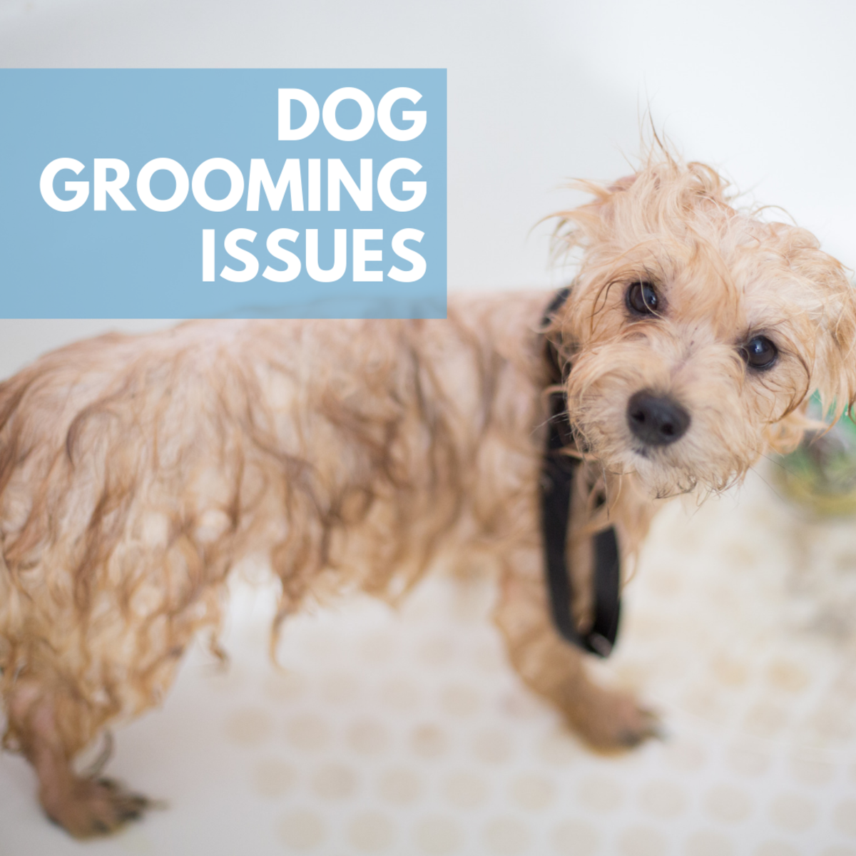 Common Dog Grooming Issues
