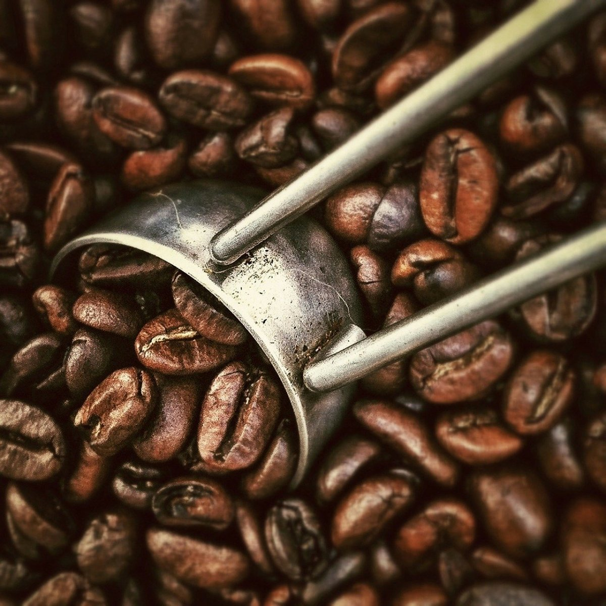 Get some advice about starting a business as a coffee roaster.