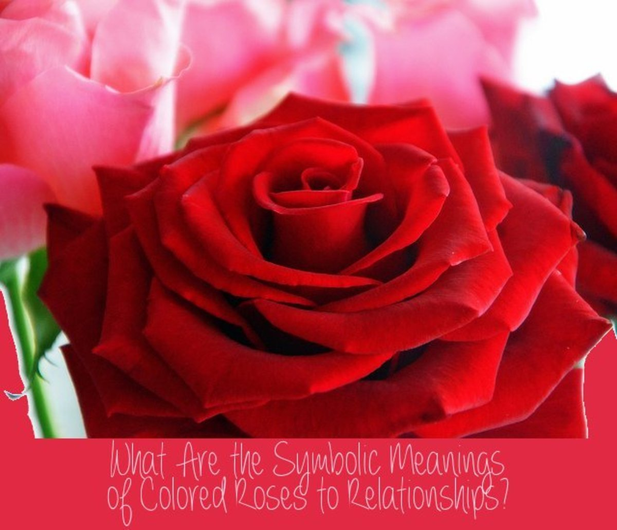 Differently colored roses represent different things in relationships. Giving your lover the wrong color rose could send the wrong message. Knowing these colors will help you to pick up the best bouquet (or single rose) for your loved ones.