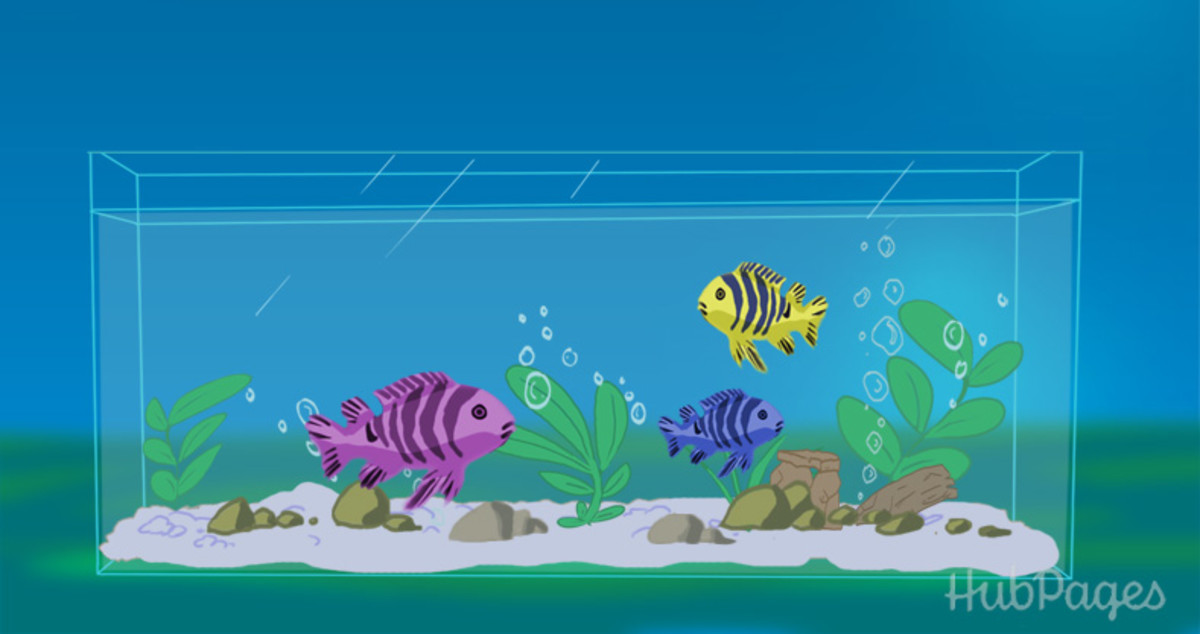 How to keep your aquarium crystal clear at all times for Best way to clean a fish tank