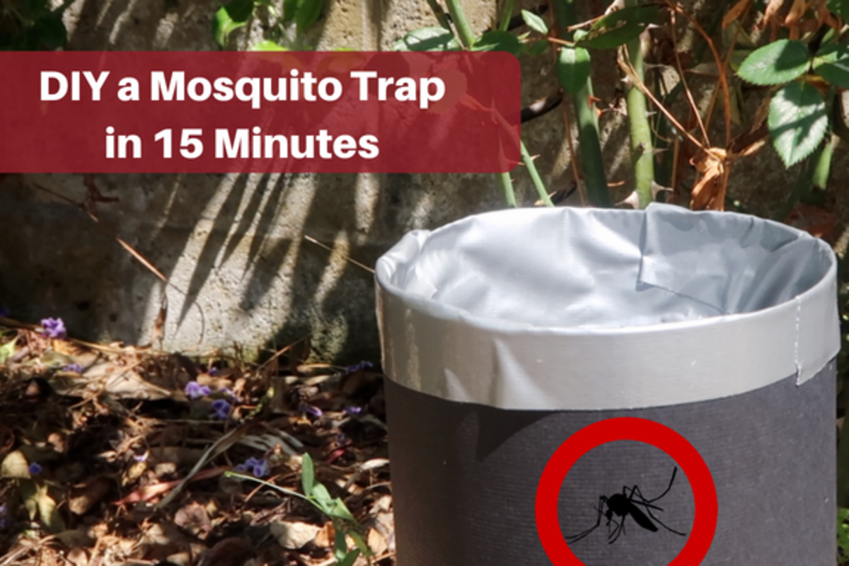 Eliminate mosquitoes from your life with this homemade trap!