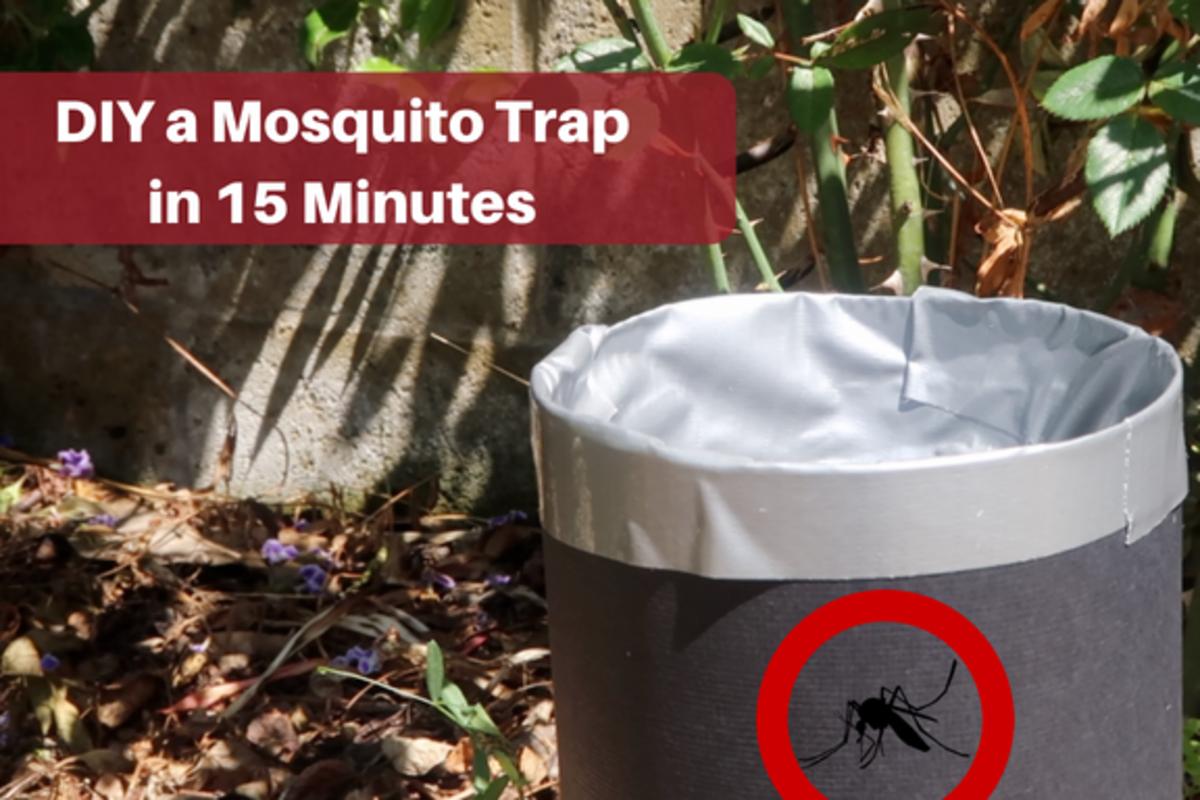 How to Make a Homemade Mosquito Trap | Dengarden