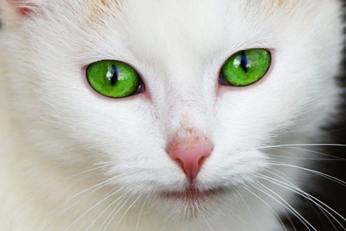 Some people believe that the sudden appearance of a white animal can be a warning sign of misfortune yet to come.