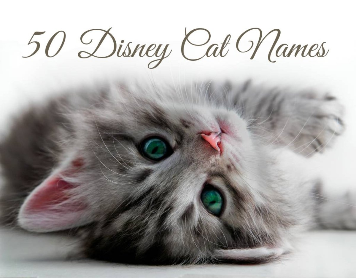 50 Disney Cat Names