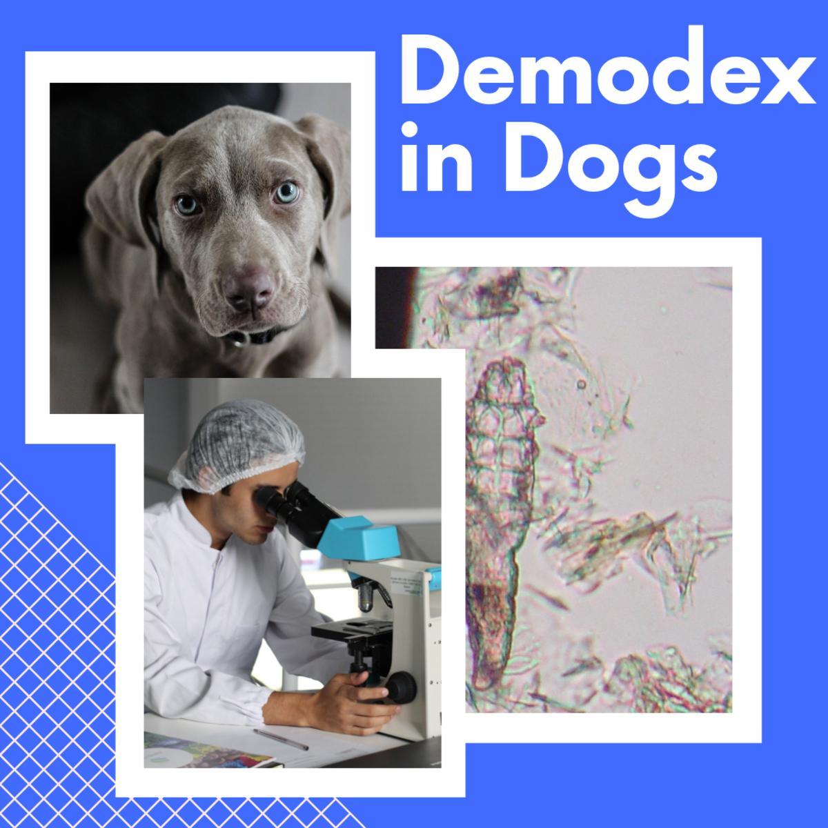 Dog Diseases: Demodex